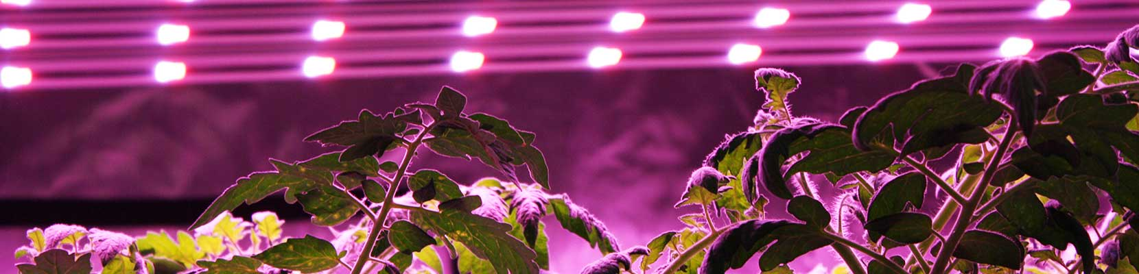 The HPS Vs LED Grow Light Matchup Is A Clash Of The Titans. Is LED More  Efficient Than HPS? Do LED Grow Lights Yield More? Are They Equivalent?